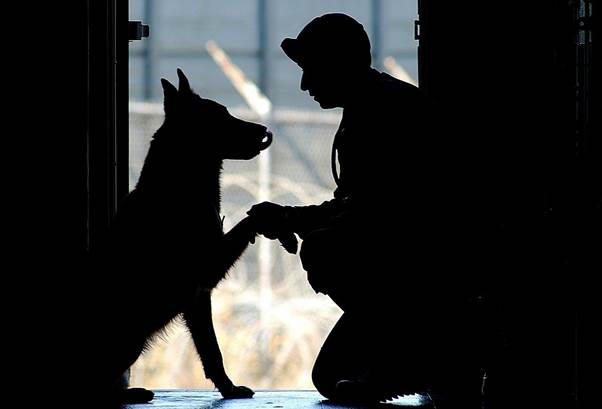 What is the difference between service animal and emotional support animal