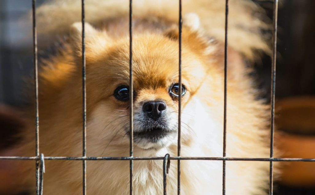 a pet friendly property keeps long-term tenants